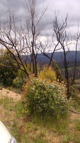 Kinglake West 1