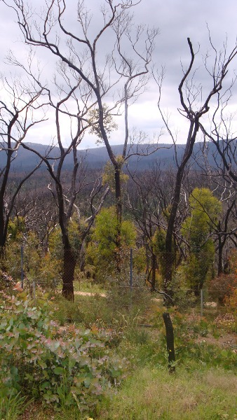Kinglake West 2