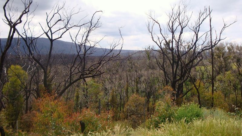 Kinglake West 3