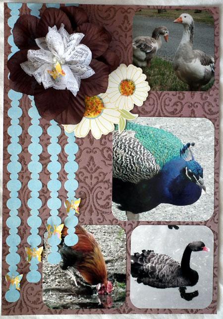 Birdlayout
