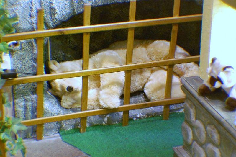 Snoring teddy